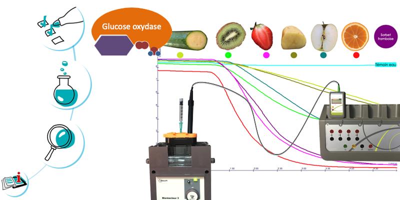 L'activité enzymatique de la glucose oxydase